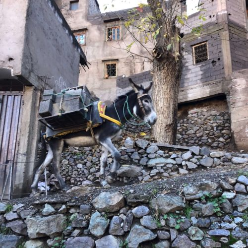 Hardworking mule carrying concrete